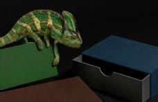 蜥蜴商业摄影