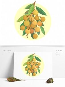 龙眼桂圆水果植物立秋天秋收获丰收农作物
