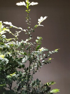 绿植 室内 摆饰 绿化 景观