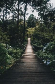 森林中吊桥