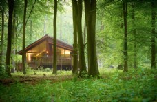 森林原居民