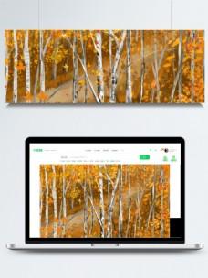 秋天你好枫树林背景素材