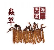 冬虫夏草虫草宣传促销艺术字中国风