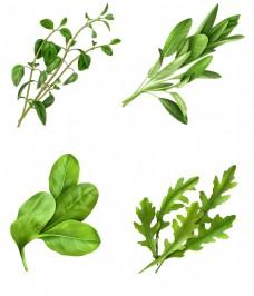 绿色蔬菜图案