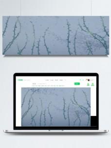 绿色枝条浅蓝色卡通背景