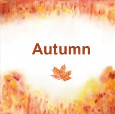 枫叶 autumn