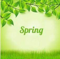 春季树叶背景