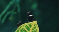 彩色的蝴蝶  飞虫摄影
