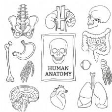 人體解剖學背景