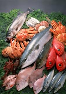 新鲜鱼虾贝蟹类水生物