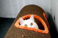 小白猫躲猫猫
